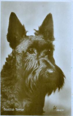 Vintage RARE Valentine's England Photo Postcard PC Scottie Terrier Dog c1910