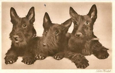Old RARE Sepia Postcard PC 3 Scottie Terrier Dogs Lotte Herrlich Germany 1934