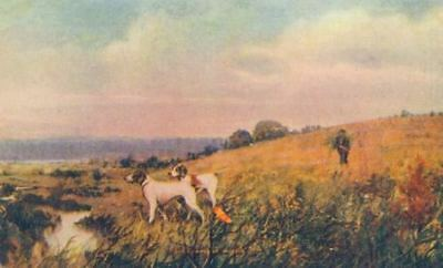 Old Art Postcard PC 2 Pointer Hunting Dogs & Hunter in Field USA Made c1908
