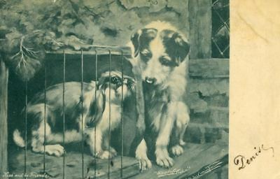 Rare Old Postcard PC Jack Russell Terrier Dog & Rabbit Kiss & Be Friends 1905