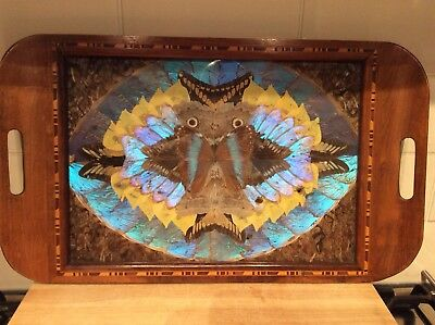 Brazilian Butterfly Tray/ Wall Art