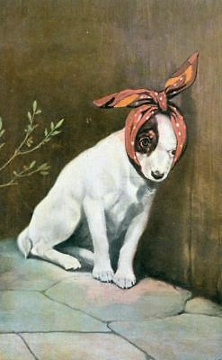 Old Postcard PC Bandaged Smooth Jack Russell / Fox Terrier Dog Netherlands 1911
