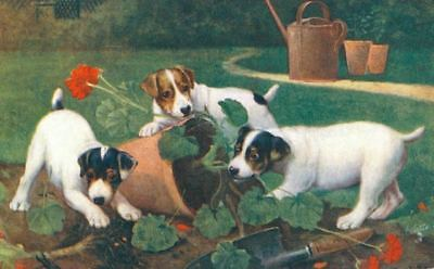 Postcard Jack Russell & Fox Terrier When Dogs Are Puppies c1910 Tuck's Oilette