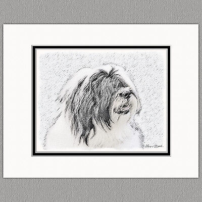 Bearded Collie Dog Original Art Print 8x10 Matted to 11x14