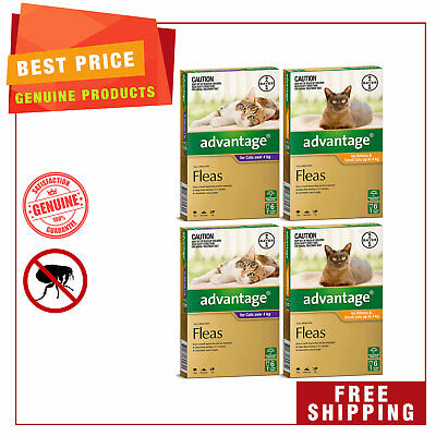 ADVANTAGE for Cats 12 Pipettes + EXTRA 4 Pipettes Best Flea treatment for Cats