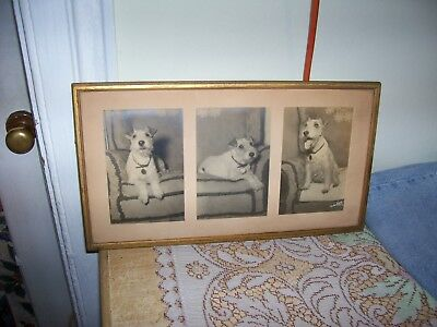 Gustave Toley [Signed Photo's -1942] Lakeland Terriers