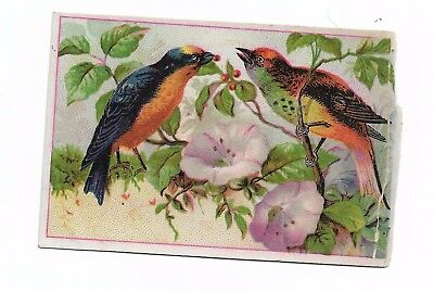 Two Colorful Birds on Branch Pink White flowers No Advertising Vict Card c1880s