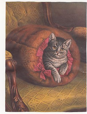 Grey Kitten Nestled in Fur Muff on Chair No Advertising Vict Card c1880s