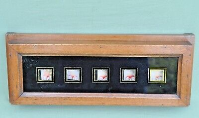 Antique Oak Cased 5 Window Servants Butlers Bell Box Room Indicator Victorian