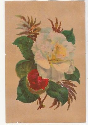 White and Red Flower Fern Green Leaves No Advertising Vict Card c 1880s