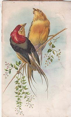 Colorful Black Red Yellow Birds on Branch No Advertising Vict Card c 1880s