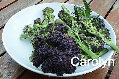 "50 Seeds "" Purple Sprouting Broccoli ""  Brassica Oleracea, Purple Flower"