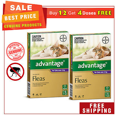 ADVANTAGE PURPLE Pack for Cats Over 4 Kg 12 Pipettes + EXTRA 4 Pipettes by Bayer