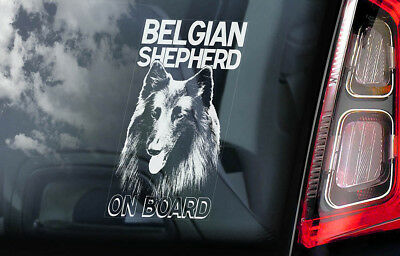 Belgian Shepherd on Board - Car Window Sticker - Groenendael Sign Decal Gift V01