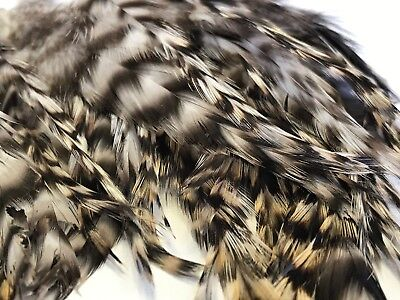 BULK 50 Badger Saddle Grizzly Rooster Feathers 7-13cm DIY Craft Millinery Flyfis