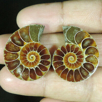 BEST OFFER 52.35Cts. NATURAL FOSSIL  AMMONITE PAIR FANCY CABOCHON TOP GEMSTONES
