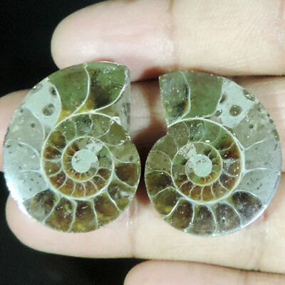 BEST OFFER 70.70Cts. NATURAL FOSSIL  AMMONITE PAIR FANCY CABOCHON TOP GEMSTONES