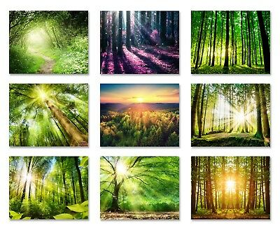 Forest woods nature photo Wallpaper wall mural 9 designs Forest Sunrise