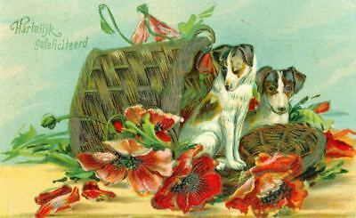 Postcard Jack Russell / Fox Terrier Dogs Embossed Congratulations c1908 Germany