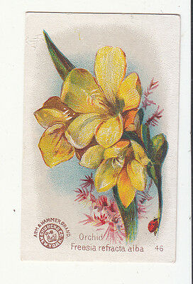 Arm & Hammer Soda Beautiful Flowers No. 46 Orchid Freesia Vict Card c1880s