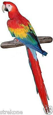 MACAW Amazon Rainforest Bird Colorful Parrot Window Cling Decal Sticker - NEW
