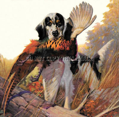 Antique Hunting Repro Photo Print English Setter Retrieving Rooster Pheasant
