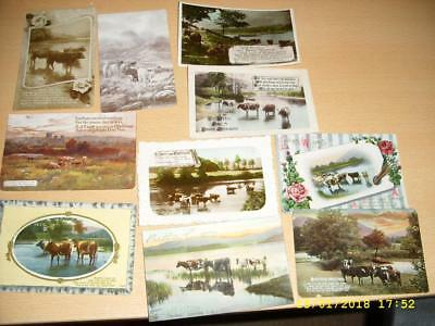Cattle / Cows  - Collection Of Vintage  Greeting Postcards