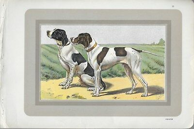 Pointers Pair Dog French Color Lithograph by Mahler c.1904