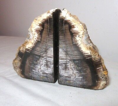 pair of antique handmade carved natural real petrified wood bookends book ends