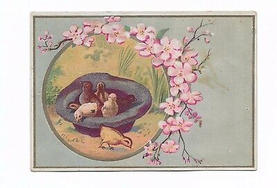 Baby Ducks Duckling in Black Hat Pink Flowers No Advertising Vict Card c1880s