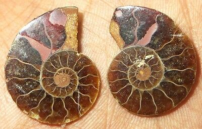 26Cts. 100% Natural Ammonite Fossil Nice Matched Cabochon Pair Gemstone 1461