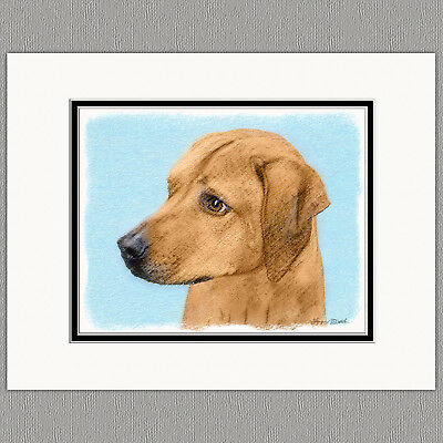 Rhodesian Ridgeback Dog Original Art Print 8x10 Matted to 11x14