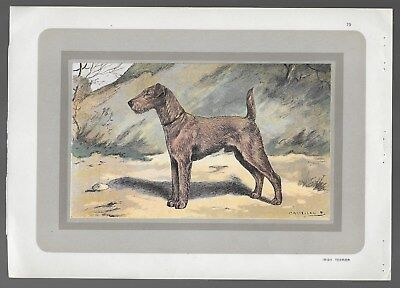 Irish Terrier Dog Antique French Color Lithograph c.1904