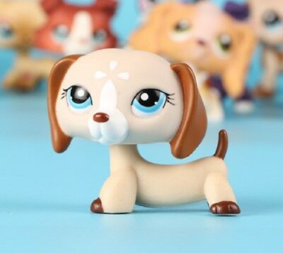 Littlest Pet Shop dog Brown White Flower Dachshund LPS puppy #1491 blue eyes