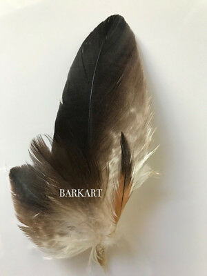 """Real "" WEDGED TAILED EAGLE FEATHERS   4 PIECE ARRANGEMENT  AUSTRALIAN"
