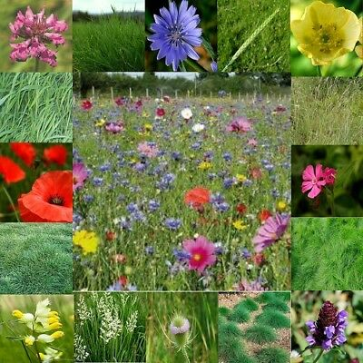 Ivisons Wildflower Seeds 50/50 Mix 3 Bumble Bee Butterfly Mix UK Wild Flower