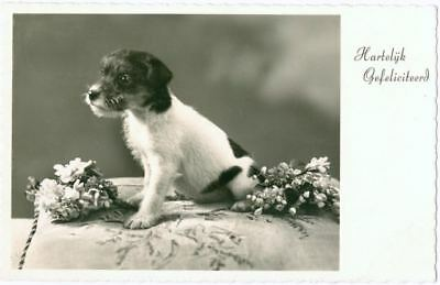 Rare Dog Amag Postcard Smooth Fox / Jack Russell Terrier Puppy Netherlands c1950