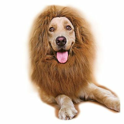 Fancy Dress Up Déguisement Animal domestique Halloween Vêtements Lion Mane Pe