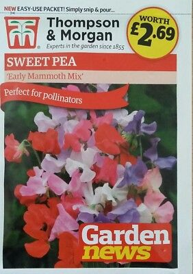 FLOWER SWEET PEA  EARLY MAMMOTH MIX Thompson & Morgan 25 FLOWER SEEDS FREE P & P
