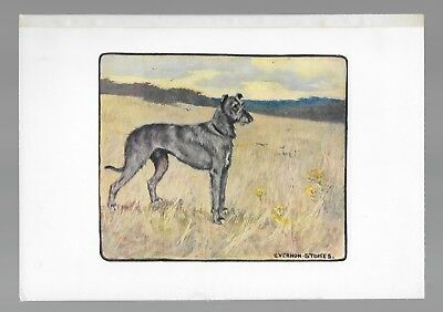 Scottish Deerhound Antique Color Lithograph Dog Print G. Vernon Stokes c.1906