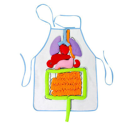 Human Body 3D Anatomy Apron Heart Lung Kidney Child Kids Medical Educational