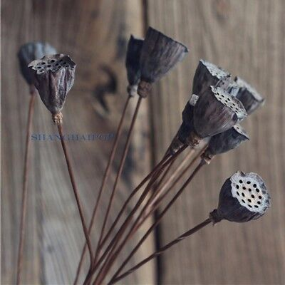 5 Dried Lotus Seed Pod Head Stem Natural Floral Home Art Decoration Decor Prop