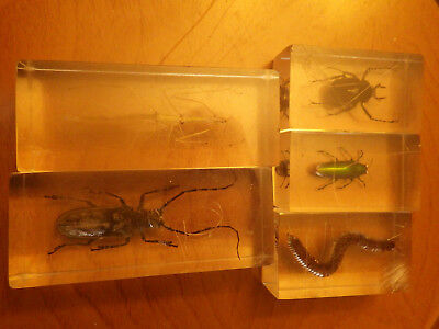 LOT 5 VINTAGE REAL BUG INSECT SPECIMENS IN RESIN LUCITE Walking Stick Beetles +