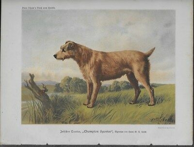 Irish Terrier Dog Cassell's Antique Chromolithograph c.1890