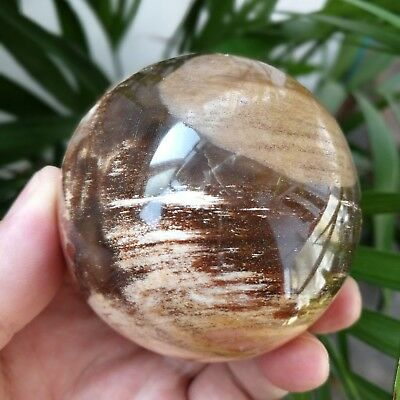 432g 67mm Natural Petrified Wood Fossil Crystal Polished Ball Specimen A11