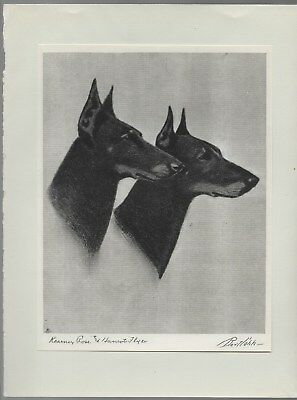 Manchester Terrier Pair Head Study Vintage Dog Etching Print Bert Cobb 1931