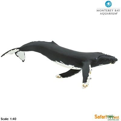 Humpback Whale model figurine ~ Safari Ltd # 210002 ~ Monterey Bay collection