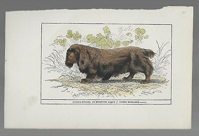 "Sussex Spaniel Antique Hand-Colored Print Ch. ""Bridford Giddie"" 19th Century"
