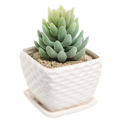 Ceramic Succulent Planter Pot, Decorative Wavy Coil Design & Drainage Plate