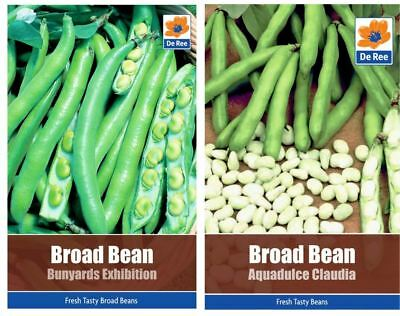 2 PACKETS of BROAD BEAN SEEDS - Aquadulce Claudia & Bunyards Exhibition